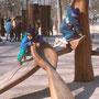 jeux de billes et à grimper - bois de séquoia