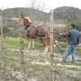 Wo nur noch Esel und Pferd hinkommen.