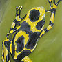 Poison arrow Frog  (2007) 40 x 100 cm