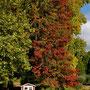 Herbst im Westfalenpark Dortmund