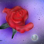 「薔薇と真珠Ⅱ」  post card size/  2012年作