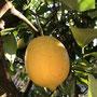 竹下様 『檸檬』 福岡県
