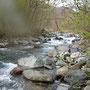 2010年5月2日、薄根川の中流から上はこんな感じ