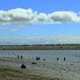 Fischer am Kenai River