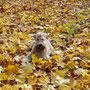 осень...7 мес