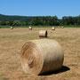 Juli und die ersten abgemähten Felder