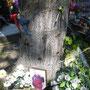 Tatort und Gedenkstätte: An vielen Bäumen neben der Institutska-Straße sind noch die Einschusslöcher des 20. Februar zu sehen. Denen, die hier starben, wird mit Bildern und Blumen gedacht. Foto: Stefan Korinth