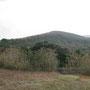 ぼう〜として見える木は大島桜。黒いのは大島椿。手前の低木はハンの木