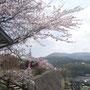 地域の桜名所、御橋観音( おはしかんのん)。