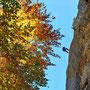 ... bevor es vorbei am bunten Blätterdach ...