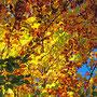 Herbst im Blautal - einfach schön!