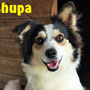 11 dicembre 2016 -  Chupa, proveniente dal sud e accolta nel nostro Rifugio, ha trovato in breve tempo una vera casetta e chi l'amerà per sempre...