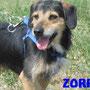 febbraio 2016 - Zorro, dopo svariati anni in canile, hai trovato chi si è innamorato del tuo musetto e ti riempirà di coccole e ti farà dimenticare il passato! sii felice tesoro...
