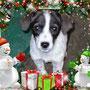 gennaio 2014 - la piccola Sally aveva chiesto a Babbo Natale una casetta nuova: gliel'ha portata la Befana: è stata adottata!!! Felice vita pelosetta...
