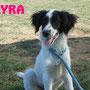 30 settembre 2015 - Kyra, tenera cucciolina, ha trovato la sua famiglia e una casetta piena d'amore... sii felice, dolce pelosetta!!!