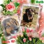 novembre 2013- Ruth, dolce e timida pelosotta, ha trovato la felicità: è stata adottata da Giusy, storica volontaria di Amici di Fido, e da suo marito! Ruth vi ripagherà con tanto amore...