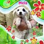 """30 maggio 2014  - anche Mela (uno dei """"fruttini"""" dalla Calabria) ha trovato la sua casetta: è stata adottata e vivrà a Roma, coccolata e viziata dalla sua nuova famiglia!!!"""