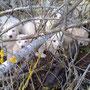 cuccioli dell'Aquila, salvati dopo il terremoto e adottati