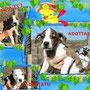 2012 -  cuccioli molossoidi...11 e tutti ADOTTATI...
