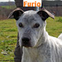 5 gennaio 2017 - Furio