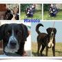 3 gen 2015 - Manolo, uno dei cani di Riano che rischiava la deportazione...è stato adottato!!! Eccolo felice nella sua nuova casa, accompagnato dai volontari di Vallegrande! sii felice, gigante buono e grazie a chi ti ha accolto come uno di famiglia!!!...