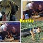 27 settembre 2014 - Bertie ha smesso di piangere: ora ride!!! E' stato adottato a Roma da Mariana, nuova volontaria di Amici di Fido, e da Paolo... siate felici insieme!!!...