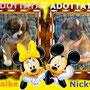 2013 - adottati Naike e Nicky...ora felici e coccolati nella nuova casetta!!!