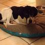 26 feb 2015: Taco, dopo tanta sofferenza, hai avuto il tuo riscatto!!!...eccolo felice nella sua nuova casa...