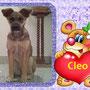 aprile 2013 - Cleo, ex Lea, una delle poverelle venute dal sud, è stata adottata: eccola cresciuta e felice a casetta!!!