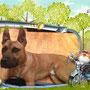 15 marzo 2014- il bellissimo Cosmo è stato adottato! E' andato a vivere a Pomezia (RM) in una bella casa con un giardino enorme e dove ha trovato anche un'amica pelosa, non indifferente al suo fascino e due padroni favolosi...