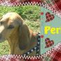 16 novembre 2015 - Perla, dolce segugetta dallo sguardo languido, è stata adottata ed ora, per lei, tante coccole e amore che riporteranno il sorriso nei suoi occhi!!! sii felice, dolce pelosetta...