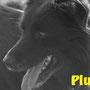 """12 novembre 2015- Pluto, uno degli """"storici"""" del nostro Rifugio, ha avuto il suo riscatto dalla vita: un'adozione e una location... a 5 stelle!!!  ti meriti tutto, dolce pelosotto!!! sii felice con la tua mamma, Annamaria!!!..."""