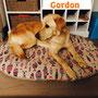 8 dicembre 2016 - Gordon ha lasciato il canile: è andato a vivere a Trevignano...eccolo felice nella sua nuova casetta col suo cuscinone!!!... sii felice...