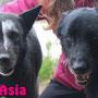 21 maggio 2016 - Asia e Nanà hanno trovato la forza di vivere in canile sostenendosi a vicenda ed ora... hanno trovato chi le ha volute portare a casa...insieme!!! siate felici...