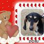2013 - Dori, dolce e timida pelosetta, ha trovato chi l'amerà per sempre...