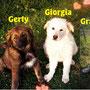 """aprile 2016 - le 3 G: queste tre splendide pelosette, dopo un breve """"passaggio"""" in Rifugio, hanno trovato tutte casetta!!! siate felici coccolose..."""