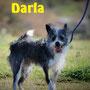 gennaio 2017 - Darla