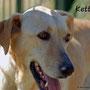 agosto 2015 - Ketty, dal manto di velluto, dopo tanto soffrire... è stata adottata!!!