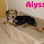 19 novembre 2016 - la dolce Alyssa ha trovato casetta e una famiglia che la tratta come una principessa...