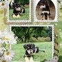 14 agosto 2014 - Poppy è stata adottata a Roma e andrà a vivere in una bella famiglia dove avrà anche un'amichetta umana con cui giocare...tanta felicità a tutti!!!