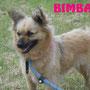 12 giugno 2016 - BIMBA, tenera scriccioletta, è stata adottata ed è rimasta a vivere a Roma... sii felice tesoro!!!
