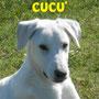 29 aprile 2017: Cucù, adottato a Roma da Cristina e Mario e...dalla sorella pelosa Mara...