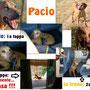 7 giugno 2014 - il nostro bellissimo segugio Pacio è stato adottato: è andato a vivere al nord!...sii felice, dolce Pacio!!! E' tempo, per te, di dimenticare il tuo triste passato: ora solo amore e gioia!!!