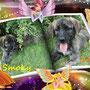 luglio 2013 - Smoky e Lucy adottate insieme a Capranica...