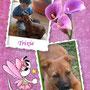 ottobre 2013 - Trixie è stata adottata ed ha un fratellino umano con cui giocare e che l'adora...