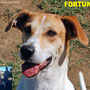 """5 marzo 2016 - Fortuna ha lasciato il canile ed è andata a vivere a Cerveteri...la sua vita sarà piena di coccole e amore e...tanta """"Fortuna"""" per la sua famiglia!!!"""