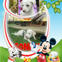 24 maggio 2014 - Mango, ora Sonny, è stato adottato!!! un grazie  speciale a Mirko e a te, pelosetto: sii felice!!!