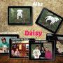 ottobre 2013- Aike, ora DAISY, è stata adottata da una splendida famiglia del nord. Le foto ci raccontano il suo viaggio verso la felicità!!! Ora solo amore per te...