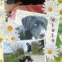 10 aprile 2015 - VIOLA, la bella tenerona è stata adottata: è andata a vivere ad Acilia (Roma)...eccola, felice nella sua casa e a passeggio con la sua mamma...