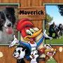 30 dic 2014 - Maverick ha lasciato il canile ed è andato a vivere a Monte Compatri: da oggi, per lui, tante corse sui prati e tante coccole e cose buone a casetta...